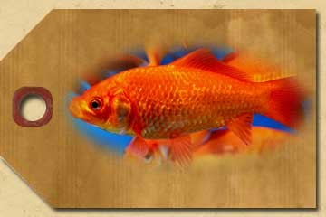 Goldfish - Various